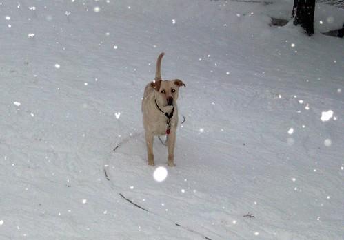 Zeus_snow_30909