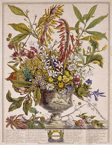 001- Enero-Los doce meses del año en flores