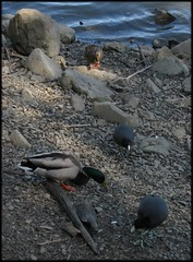 1303_birds