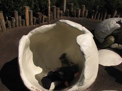 stuck in an eggshell