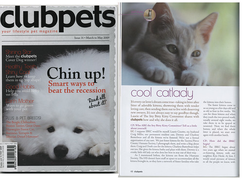 Itty Bitty Kitty Committee in clubpets Magazine