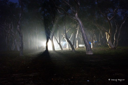 Belanglo State Forest at night | Flickr - Photo Sharing!