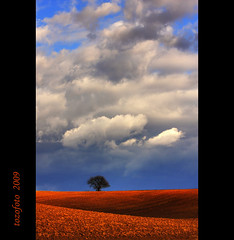 (tozofoto) Tags: light sky tree clouds landscape spring bravo hungary colours natur zala naturesfinest colorphotoaward bratanesque theunforgettablepictures thesecretlifeoftrees goldstaraward tozofoto