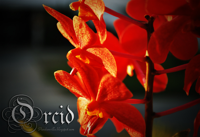 orkit
