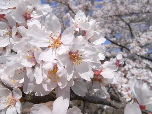 09-04-10【桜】@談山神社-02