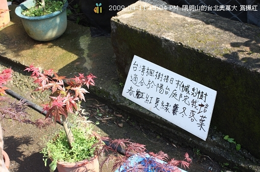 09.04.11台北奧萬大賞楓紅 (6)