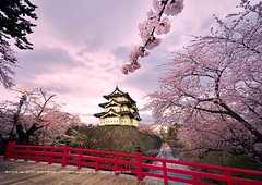 Hirosaki Castle. Wow!  Glenn Waters (Explored) This image 11,200 visits. Thank you. (Glenn Waters in Japan.) Tags: bridge pink red sky castle japan clouds landscape spring nikon asia explore aomori  getty sakura cherryblossoms hirosaki moat japon edo    japanesecastle   explored  d700  nikond700  glennwaters nikkorafs1424mmf28 54may13th