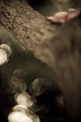 novos ngulos, outros ngulos (Julia Moreira) Tags: blur flower tree texture textura nature poetry bokeh natureza flor naturallight canoneos20d poesia tronco rvore 2009 desfoque nikonlens novosngulos luznatural ilovethislens 50mmnikon abigfave artlibre newangles notthroughtheviewfinder outrosngulos greenteagallery otherangles nikononcanon juliamoreira nikontocanonlensadapter nikkorsc1450mm thelensusedisover30yearsold daddyslens masterpiecesofphotography semolharpelovisor juliamoreira