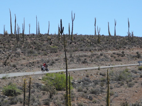 Valle de los Cirios, Harry pedaleando