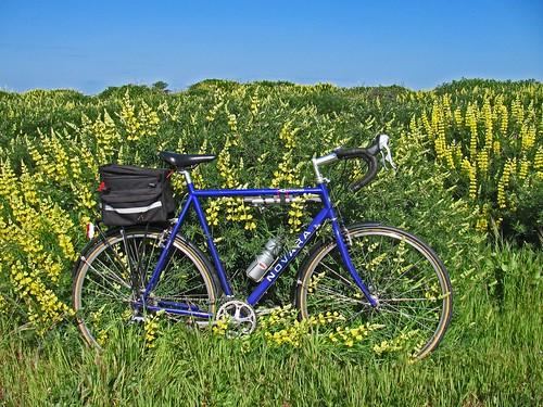 bikeandlupines