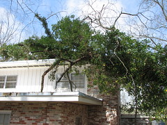 A tree humped my house!