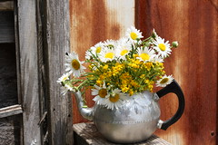 Flowers & Old Rusty Building (SouthCarolinaLady) Tags: old flowers rust rusty teapot jol fower mywinners mbpictures