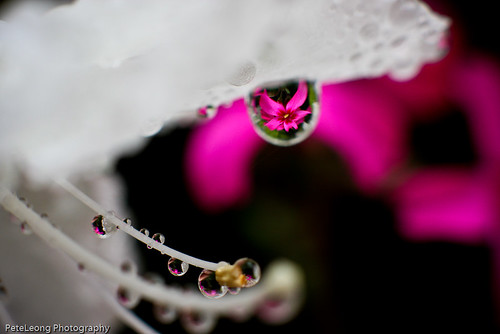 Tiny flower drops