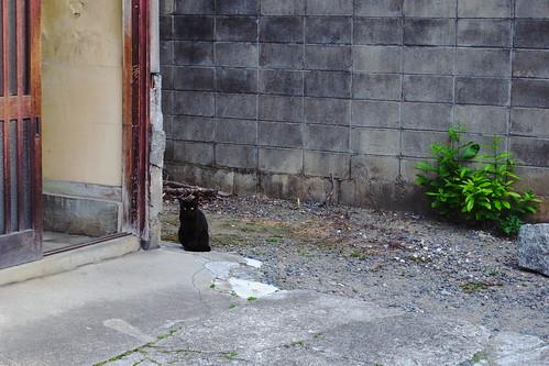 Today's Cat@20090511