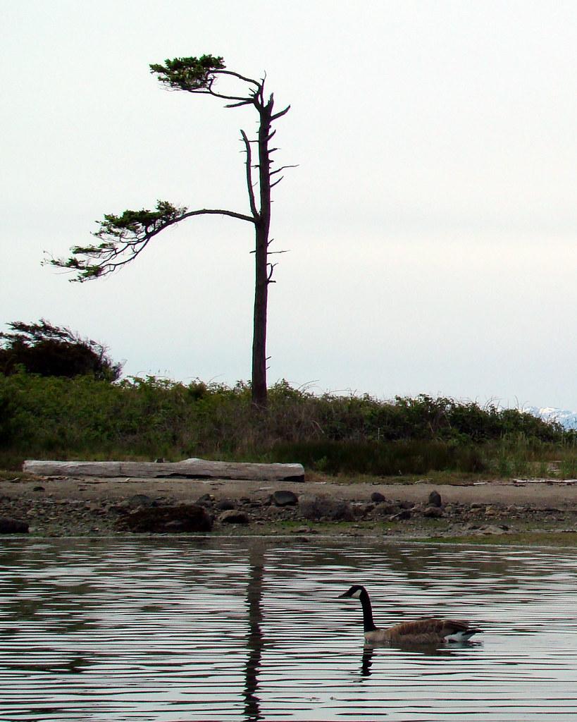 2009-05-31 Chatham 272