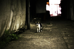 (yugoroyd) Tags: street cats cute japan night canon dark eos tokyo town kitten dof darkness bokeh ground nakano 5d straycat  ef85mm f12l
