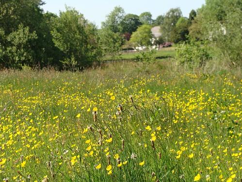 Meadow 01
