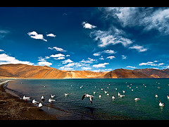 Pangong Tso (lake) (Divs Sejpal) Tags: blue sky india lake mountains color colour nature water birds clouds skyscape landscape colours gulls himalaya various range himalayan ladakh pangong crystalclear divs pangongtso divyesh waterbody saltwaterlake divssejpal sejpal dcs2551jpg outoftheworldplace