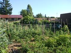Columbia gardens (ebethouise) Tags: ecovillage