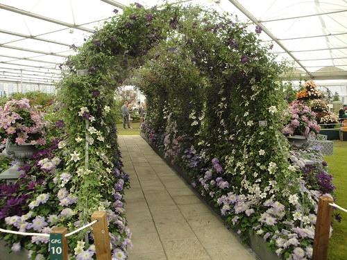 Clematis tunnel