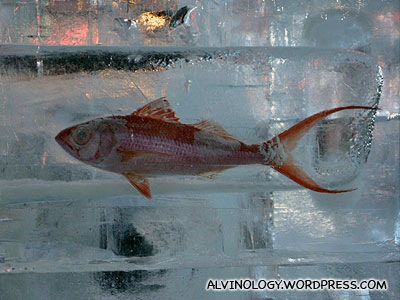 Fish with a long red tailfin