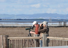 Watching the bird watchers at the Palo Alto Baylands