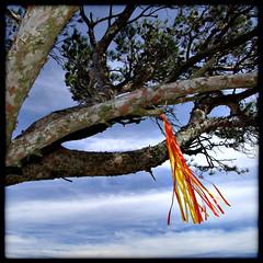 arbre dguis 2 (Pierre D. Photographiste) Tags: square provence mont var ih carr toulon faron hip2bsquare pentaxk10d carrfranais pierrediez