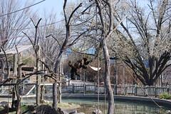 climb (BrotherShine) Tags: animals zoo louisvillezoo