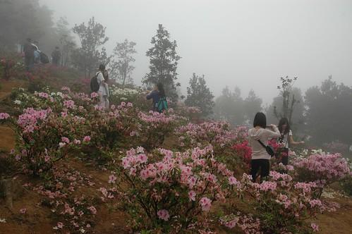 3372200209_7656c51f79 - Pink flower picking - Love Talk