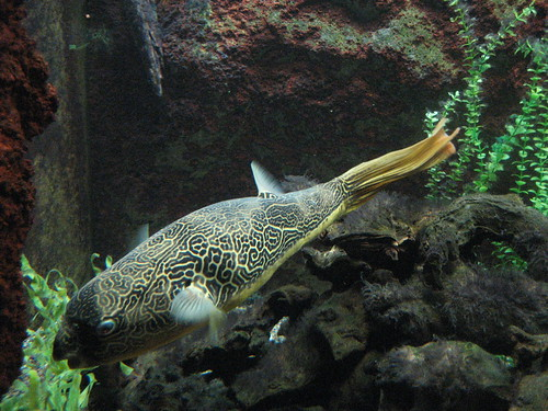 Shedd's Aquarium, Chicago