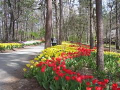 spring 09 059