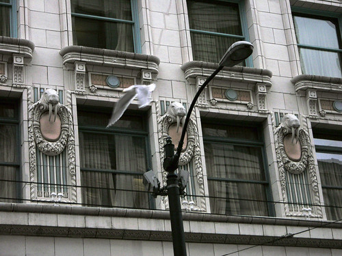 Seattle architecture: seagull flying past walrus grotesques
