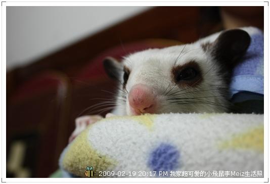 09年二三月小飛鼠Meiz生活照 (4)