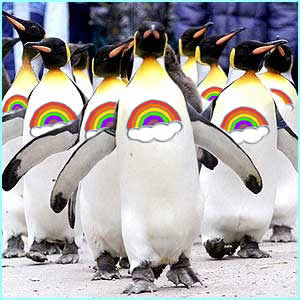 rainbowpenguins