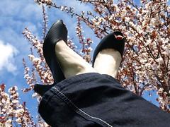 Walking in the Clouds (Shanda Panda) Tags: pink flowers blue sky black feet clouds spring shoes blossoms heels plumtree myfrontyard
