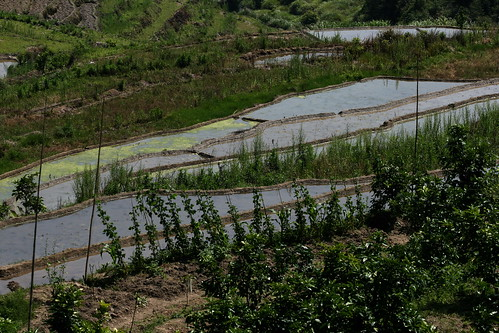 Tianluokeng Paddy Fields (by niklausberger)