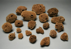Round sponges (gooseflesh) Tags: cabinet collection multiples curiosities sponges wunderkammer porifera