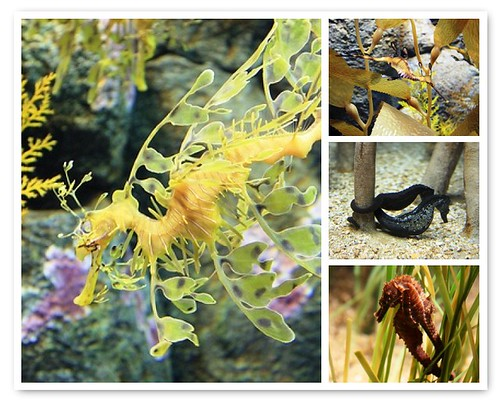 Secret Lives of Seahorses