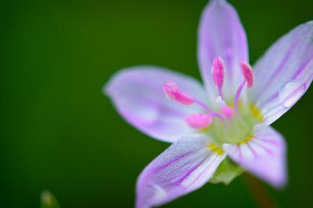 Transfer_Flowers-4