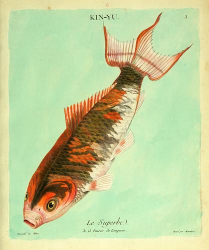 003-El soberbio-Histoire naturelle des dorades de la Chine-Martinet 1780