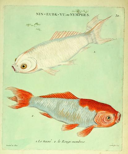 014-El Nacarado y el extremidades rojas-Histoire naturelle des dorades de la Chine-Martinet 1780