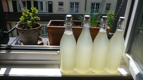 elderflower lemonade 4