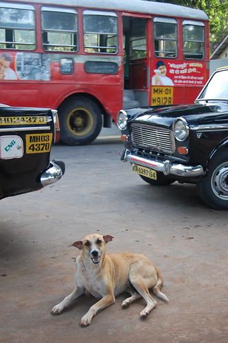 Mumbai Dog