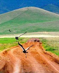 Ngorongoro Crater - North Tanzania (sambukot) Tags: africa road travel tanzania photo amazing view offroad wildlife group natura safari ngorongoro uccelli viaggio pictureperfect the eastafrica fuoristrada abigfave nikond90 fbdg nginationalgeographicbyitalianpeople colorsofthesoul slbflying artofimages platinumpeaceaward bestcapturesaoi sambukot paesaggiafricani africanlandascape