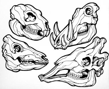 Animal Skull Drawing