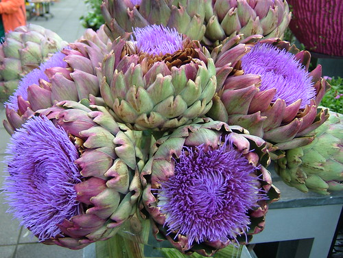 All Over Print Artichoke Flowers