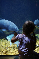 To Catch A Fish! (Southern Scene Photography) Tags: fish museum natural science slm nerboo