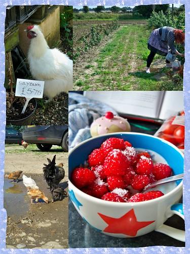 raspberry picking!