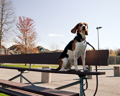 323/365 Let the game begin! (Paguma / Darren) Tags: dog hound bleachers floyd tamronspaf1750mmf28xrdiiildasphericalif