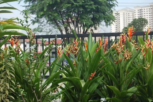 bird + heliconias